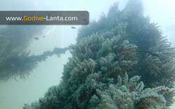 trip-diving-jetty15.jpg