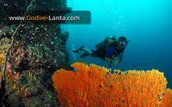 trip-diving-koh-pp10.jpg