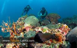 trip-diving-koh-pp07.jpg