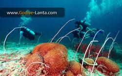 trip-diving-koh-pp19.jpg