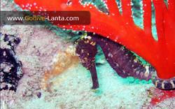 trip-diving-koh-mook17.jpg