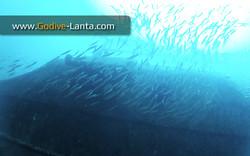 trip-diving-klet-kaew-ship-wreck1.jpg