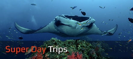 Trips Diving & Snorkeling Rates