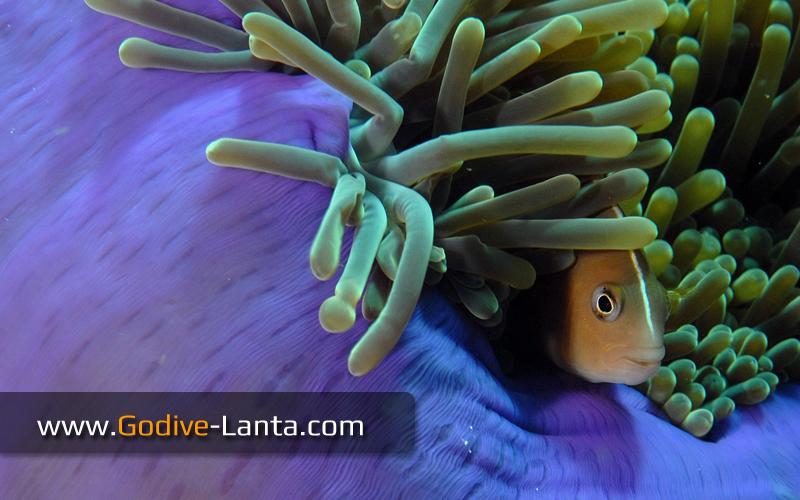 pic-marine-life