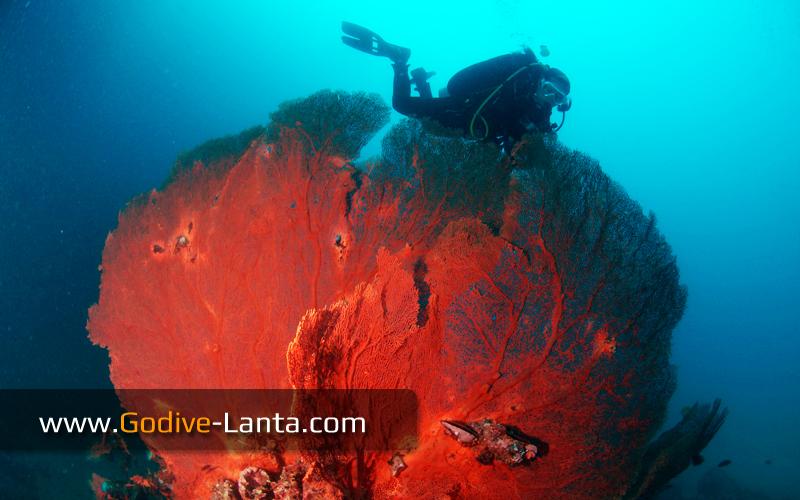 trip-diving-koh-bida20.jpg