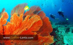 trip-diving-koh-bida08.jpg