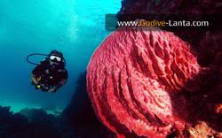 trip-diving-koh-pp02.jpg