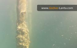 trip-diving-jetty04.jpg