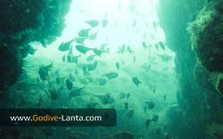trip-diving-koh-mook16.jpg