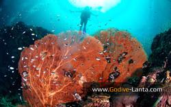 trip-diving-koh-bida23.jpg