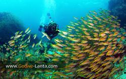 trip-diving-koh-bida12.jpg