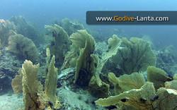 trip-diving-hin-klai3.jpg