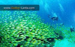 trip-diving-koh-bida16.jpg