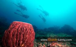 trip-diving-koh-pp17.jpg