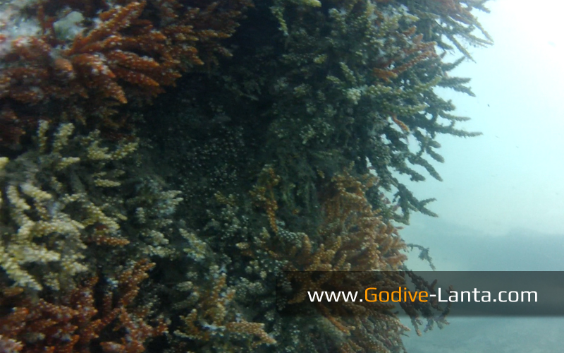 trip-diving-jetty11.jpg