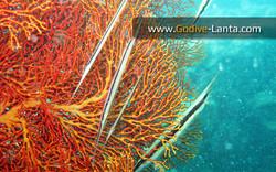 trip-diving-koh-mook12.jpg