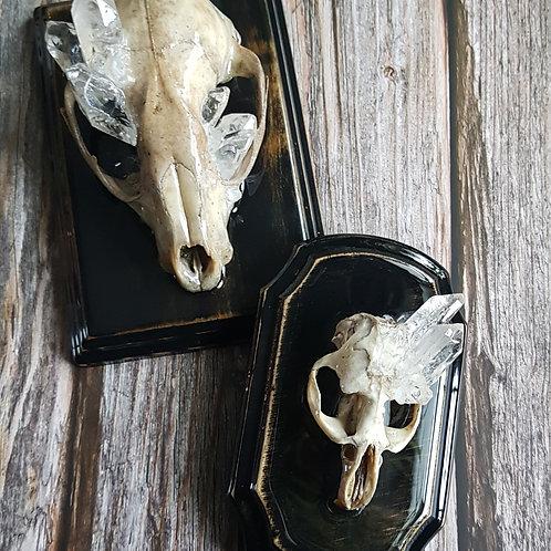 Crystalized skulls