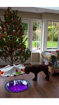 Wine Cellar Pod Christmas dog
