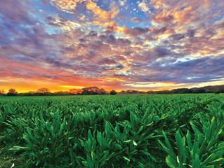 My field of Dreams: Organic Turmeric Farm