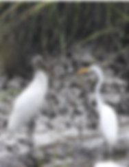 Facing Stork and Egret.png