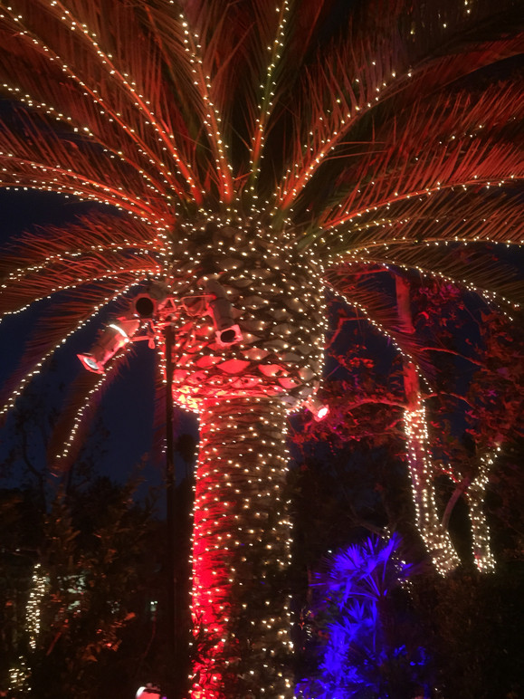 Palm tree wrapped to the fronds