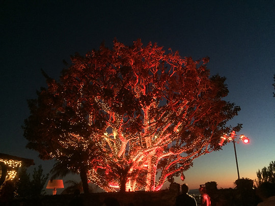 Warm white mini light tree wrap