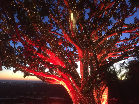 Tightly wrapped tree Mini Lights