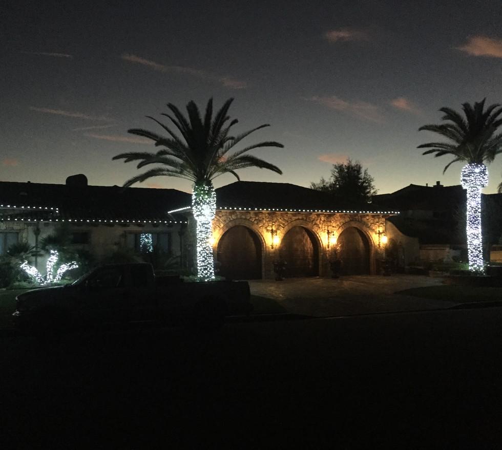 Cool white LED, palm tree