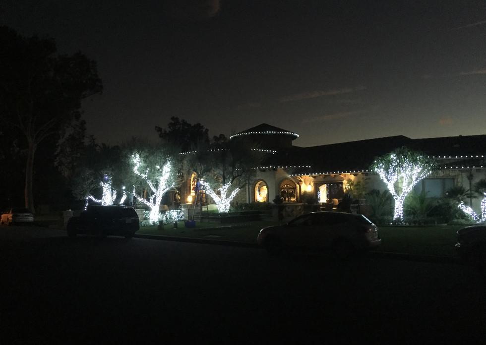 Cool white Christmas lights