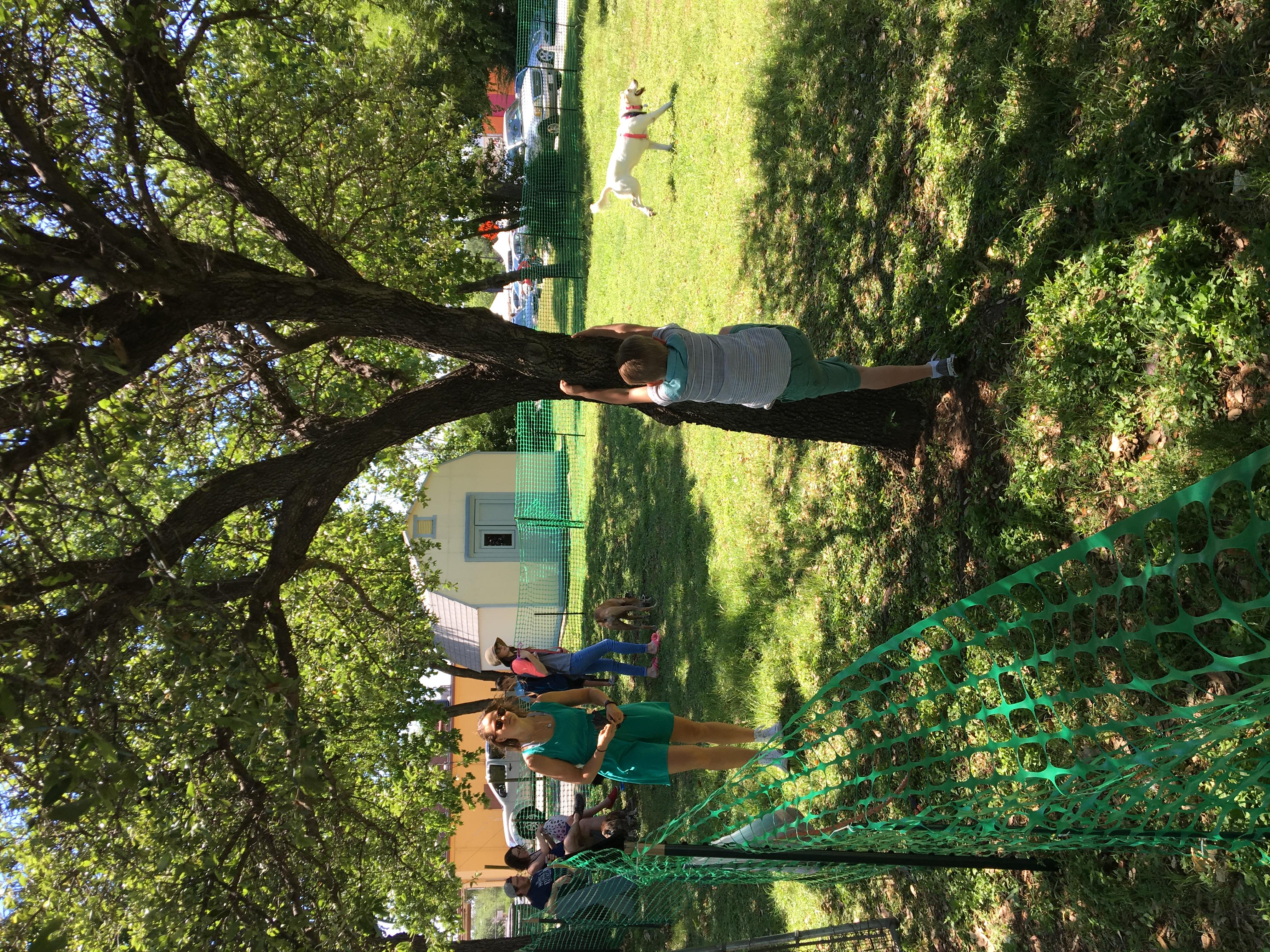 Dog Park, tree