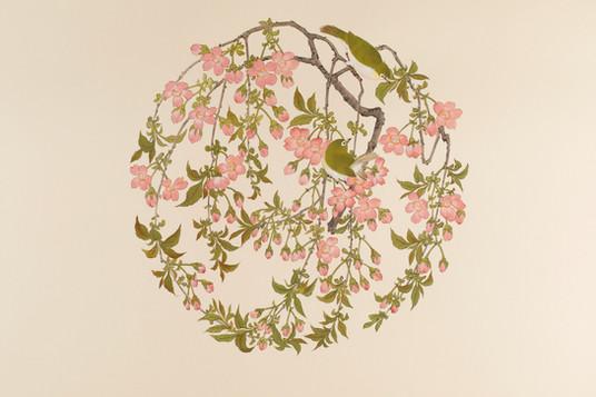 糸桜にメジロ