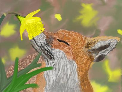 Fox Sniffling Flower