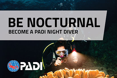 Night-OnlineBanners_EN_2.jpg