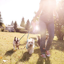Pet Care Services | Napa Pet Care