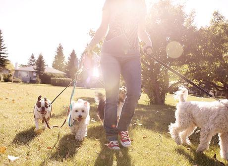 Ahwatukee Pet Sitter | 4 Paw Sitting | Bridget Freidhoff
