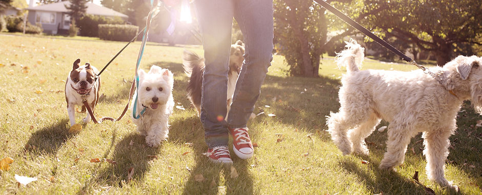 dog walker and pet sitting south shore massachusetts