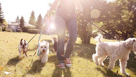 Dog Walker in Tadley