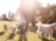 Recorriendo el perro en un día soleado