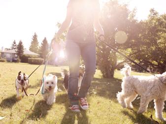 Queremos um parque de cães em Aracaju!