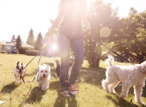 Pension pour chiens en Loire-Atlantique : Au pays de la Tribo à Rougé (44)