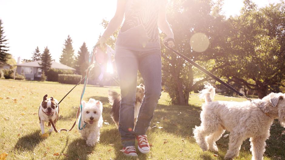Technicien/ne en service à domicile et promenade pour animaux de compagnie