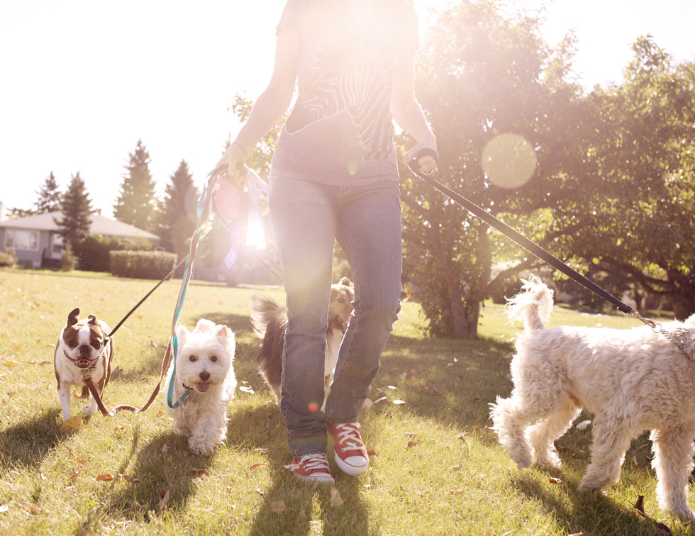 Dog Walking on a Sunny Day