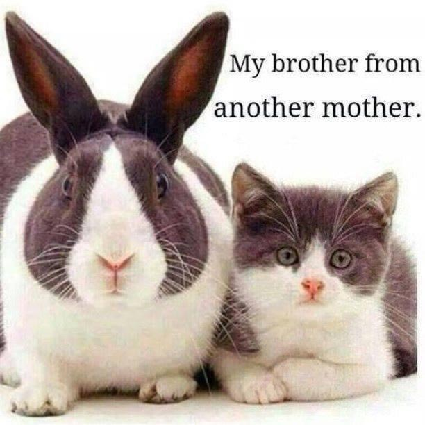 Meme of bunny and cat shared in TOVI Play