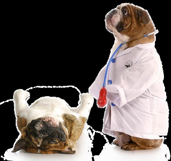 accesorios veterinarios veterinaria