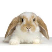 alimento conejo