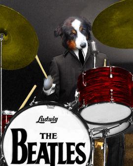 Ringo-Woof.jpg