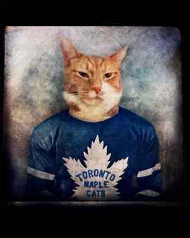 Toronto Maple Cats