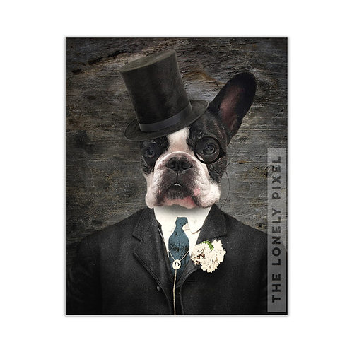 Boston Terrier - Sir Duncan