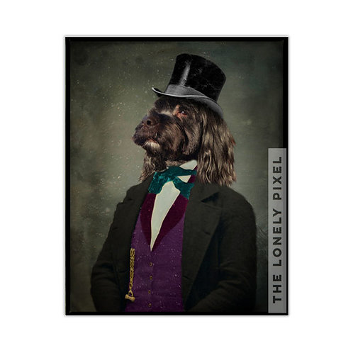 Tibetan Terrier - Sir Scooter