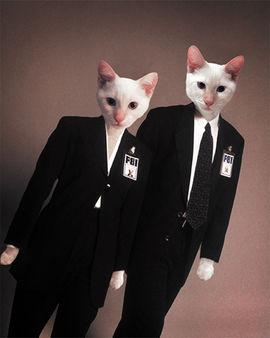 Cat-Files.jpg